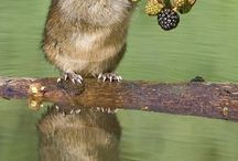 REF: Aqua Rodents
