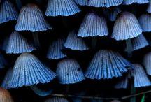 ►Concept Design: Plants and Fungi