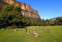 Ausztrália / Egyik kedvenc helyem Ausztrália. Régi álmom, hogy eljuthassak erre a csodálatos helyre. Remélem álmom valóra válik