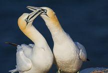 Vögel / Birds / Vogel Fotos und Bilder / Bird pictures