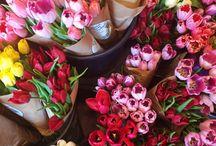 Tulipanes Amorosos / by Rosas Amorosas
