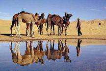 Randonnée chamelière / Trek dans sa version Saharienne, en itinérance, au rythme lent de la caravane de chameaux et des bédouins. Un dépaysement total dans un paysage de sable.