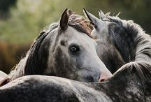 All things equine <3