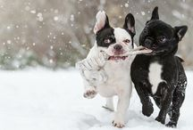 Pet Services / We are your one stop shop for all your pet needs and provide all types of pet.