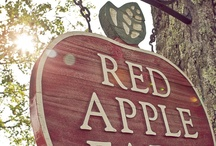 ❤ The apple farm! ❤