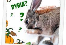 Warzywa / Znajdziesz to warzywa które możesz podawać królikowi. Pamiętaj jednak, że są one jedynie dodatkiem w zdrowej diecie królika.