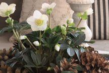 Flower arrangement/ display