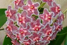 flor de cera
