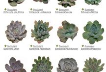 Plantes / Plantes