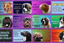 Pozorpes.cz / Výroba výstražných cedulek s fotkou vašeho psa. Potisk textilu, hrnků aj. motivem Vašeho zvířátka. www.pozorpes.cz  Beware of Dog!
