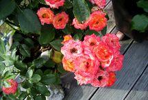 +++ Garten + Natur +++ / Unsere schöne Natur!!