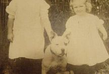 photos anciennes de pitbulls