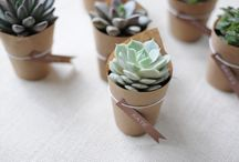 succulentas