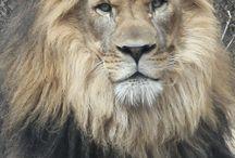 Favorite Animal Photos