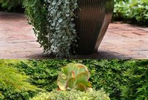 pot planting