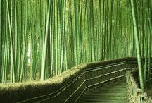 японский бамбук