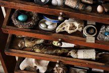Curiosites / Collections and Curiosites