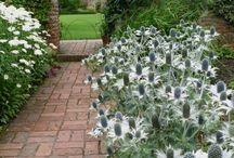 GROW | Plant care