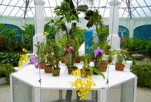 Orchids / At the Botanical Gardens, Rio de Janeiro