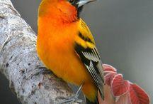 Birds / Ocells del món