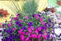 Gardening & Outdoors / by Wanda Padgett