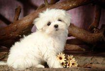 Dogs / It's so cute