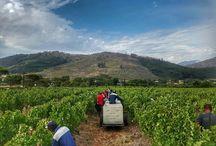 Grande Provence Harvest 2017