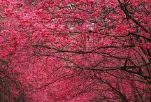 Photos Nature