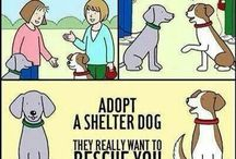 Pet Adoption / The many reasons why adopting a pet from a shelter makes perfect sense!