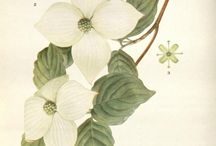Botanicals illustrations