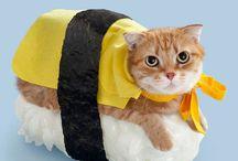 Neko-Sushi / Le Neko-Sushi, littéralement « chat sushi » en japonais, est un nouveau délire de la société Tange & Nakimushi Peanuts, qui propose une série de posters ou cartes postales de chats déguisés en sushis