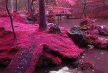pink / by Lori Clinton