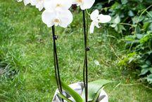 kwiaty / Potpoty z przeznaczeniem na osłonki do kwiatów i ziół. Ręcznie robione z washpapy - papieru, który można używać, prać i używać.