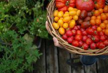 Gardening / by Crystal de Leon