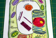 5th Grade Cells / by Sara Derr