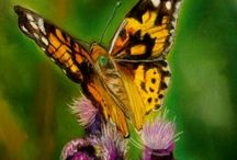 Ƹ̵̡Ӝ̵̨̄Ʒ Butterflies & Dragonflies & Bugs Ƹ̵̡Ӝ̵̨̄Ʒ / Butterflies & Dragonflies & Bugs εїз ____More of them at : https://www.pinterest.com/HBlackthorne/butterflies-dragonflies-bugs/