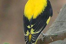 Kuş resimi