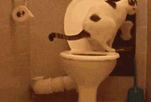gatos gostosura