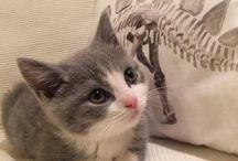 I ❤ cats