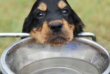 Dog Health / Everything that you need to know about dog health