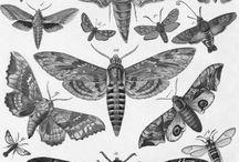 Moths tts