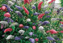 Flowers / by Tasha Wojtowicz