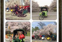 Central Park Tour 3 Hour / Central Park Rickshaw Tours