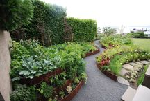 Garden - unley