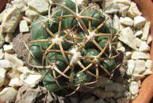 <cactus>