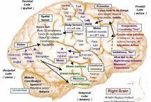 beyin haritasi