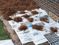 gardening - weed control