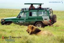 Kearsleys Safari / Kearsleys Travel & Tours Tanzania Safari