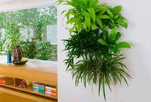 Växter inomhus / Hur vi skall sätta upp inomhus växter