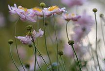 Höstväxter